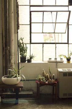 plant life, cactus, industrial windows...: