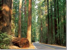Avenue of the Giants, Humboldt Redwood State Park, California