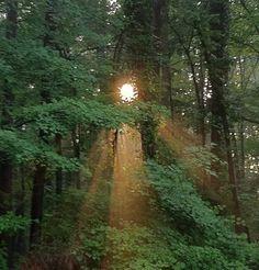 Heaven's light. by CorNocte.deviantart.com on @deviantART