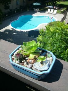 Mikes Mini Succulent Cactus Garden.  Beach glass, beach sand, sea shells and pieces of abalone shells in bonsai pot.