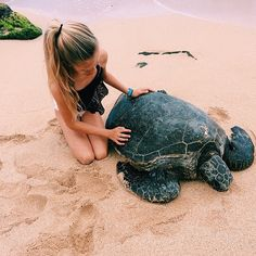 ➹ #hawaii #beach #seaturtle ➹ a cute and memorable thing to do in the aloha states ➹