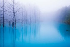 「青い池」は、北海道上川郡美瑛町白金のJR美瑛駅から約17km、白金温泉から2.5kmの位置にあります。現在では年間149万人もの観光客が、美瑛の美しい自然の姿を見に訪れます。外国人にもとても人気です。