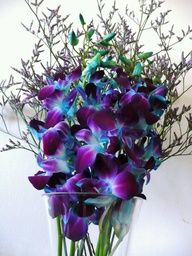 Gorgeous blue and purple flowers