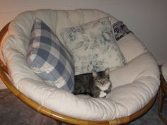 Sarah all cozy on the Papasan chair.