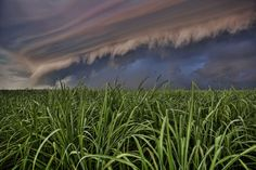 Sugarcane crop growing under a Florida sky. Believe In Miracles, Visit Florida, Ghost Towns, Fresh Water, Underwater, Exterior, Sky, World, Places