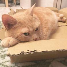 Deshalb ignorieren Katzen die Stimmen ihrer Besitzer
