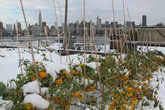 紐約 Eagle Street Rooftop Farm pinned by @dakwaarde