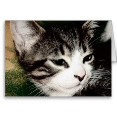Thoughtful Kitten Greeting Cards!  #kitten #zazzle #store #gift #present #customize #cute #meow #fuzzy http://www.zazzle.com/conquestkitty*
