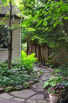 towering trees I ~ garden access