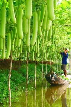 Vietnam Typical Tours - where to find all Vietnam tours. We offer a large numbers of Vietnam tours and packages to experience Vietnam your way. Vietnam Tours, Vietnam Travel, Asia Travel, Hanoi Vietnam, Vacation Travel, Fruit Garden, Vegetable Garden, Gourd Vegetable, Vegetable Meals