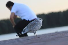 This bird makes for a lovely chair. National Geographic Photos, Your Shot, Helsinki, Finland, Amazing Photography, Birds, Chair, Animals, Men