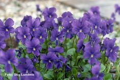 33 violetas para compartir « VIDAS VIOLETAS - La Coctelera