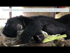 Black Bear, Facebook, Twitter, Instagram, Animal Protection, Wild Life, Grateful, Voyage, World