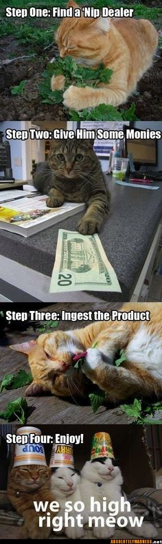This is EXACTLY what I thought goes through a cat's mind...explains a lot! LOL
