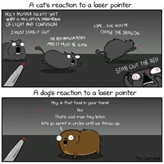 A cat's vs. a dog's reaction to a laser pointer!