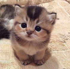Awww cutie pie