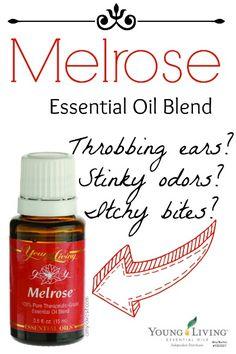 Uses for Melrose Essential Oil Blend   AmyLovesIt.com