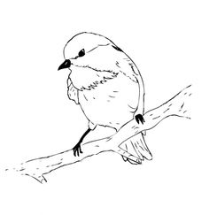 Black Capped Chickadee Coloring Page - Free & Printable Coloring Pages For Kids Bird Drawings, Drawing Sketches, Black Capped Chickadee, State Birds, Flower Coloring Pages, Art Sketchbook, Fabric Painting, Bird Art, Clipart