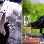 Hurja väite: Tämä voimakas juoma tappaa syöpäsoluja Monet, Parrot, Bird, Animals, Parrot Bird, Animales, Animaux, Birds, Animal