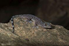 """En images : Les """"nouvelles"""" espèces découvertes dans la région du Grand Mékong"""