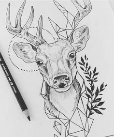 Todays deer animals в 2019 г. kunstzeichnungen, tattoo zeichnungen и zeiche Animal Sketches, Animal Drawings, Drawing Sketches, Drawing Animals, Drawing Drawing, Drawing Tips, Drawing Ideas, Sketching, Deer Sketch