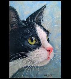 tuxedo cats and holidays paintings Watercolor Animals, Watercolor Paintings, Image Chat, White Cats, Black Cats, Cat Drawing, Animal Paintings, Cool Cats, Pet Portraits
