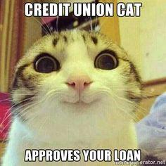 Credit Union cat. #CUdifference #banksvscreditunions memes Funny Bank credit union jokes humor cartoons http://www.oaktreebiz.com/