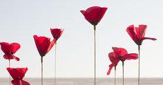 BEM-VINDO AO E.S.P FASHION BLOG BRASIL: Kenzo Flower By Kenzo Eau Florale