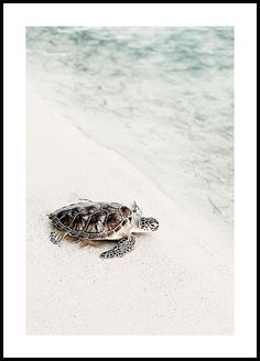 Cute animal poster of a sea turtle making her way back to the sea. The soft tones incite wonderfully warm vibes and a tropical feeling to the poster. Did you know that there are only 7 different species of sea turtles in the world, of which 5 are Poster Surf, Poster Xxl, Poster Photo, Beach Posters, Love Posters, Beautiful Posters, Buy Posters, Prada Marfa, New York Poster