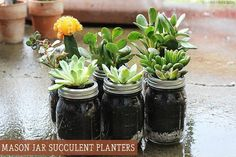 Succulents. They are irresistibly pretty and all the rage right now. I, having such a green thumb, decided it was...