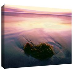 Twilight Kelp' by Dean Uhlinger Photographic Print Gallery-Wrapped on Canvas