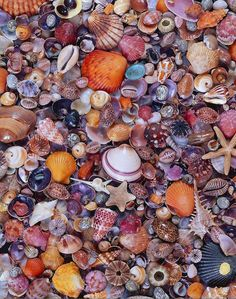Shells, there is a large variety of shells here, ranging from neutral coloured shells to bright and vibrant coloured shells.