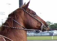 Make Your Own Bridle (image heavy) *Instructions added!!*