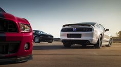 Shelby GT SuperSnake ford mustang muscle f wallpaper