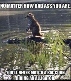 Ha! That is a bad ass raccoon.