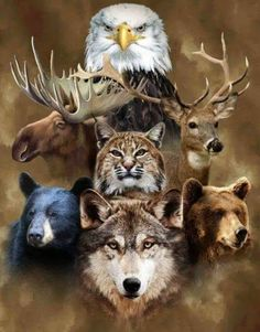 Faux Fur Appealing Animal Throws - Shop Stoneberry on Credit Native American Wolf, Native American Artwork, American Indian Art, Eagle Pictures, Wolf Pictures, Animals And Pets, Baby Animals, Cute Animals, Beautiful Wolves