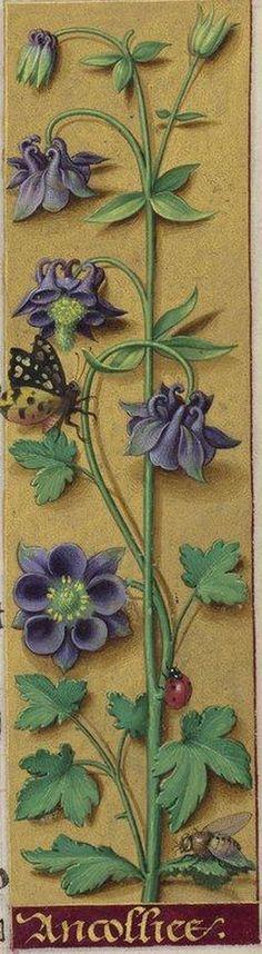 Manuscript illuminator Jean Bourdichon (1457-59-1521), 1503-08, Grandes Heures d'Anne de Bretagne, France.