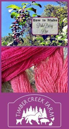 How to make pokeberry dye.