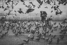 Paris 2015 by Teemu Lautamies - Photo 134679087 - Paris 2015, Photography Tools, Black And White Photography, Street View, Gallery, Pigeon, Painting, Animals, Beautiful