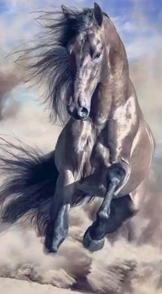 for me it represents Strength and Beauty at the same time – Popular Tinker 2019 Most Beautiful Horses, Pretty Horses, Horse Love, Animals Beautiful, Gray Horse, Rare Horses, Wild Horses, Horse Photos, Horse Pictures