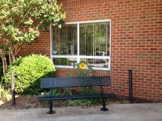 The Butterfly Garden at the school entrance - a sunflower volunteer from last winter's bird feeder.