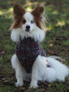Nordic Yarns and Design since 1928 Dog Sweater Pattern, Knit Dog Sweater, Lace Cardigan, Dog Sweaters, Lace Knitting, Knitting Patterns, Knit Crochet, 4 Ply Yarn, Wool Yarn