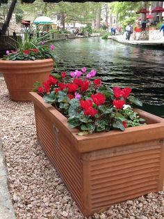 Not a garden per se, but a gorgeous place to stroll, visit and appreciate the beauty around in the containers and baskets. Also great place to people watch. Great Places, Places Ive Been, San Antonio Riverwalk, Gardens Of The World, River Walk, Baskets, Planters, Texas, Container