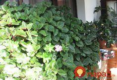 Natural Medicine, Aloe Vera, Herbs, Nature, Home Decor, Hana, Spices, Gardening, Inspiration