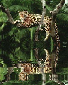 Leopard lying on a tree branch