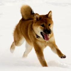 Renji wishes he could run in snow like this!