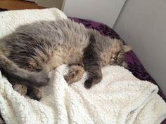 Lost Cat - Tabby - Georgina, ON, Canada L4P 3C8