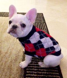 Ponzu, French Bulldog Puppy❤❤