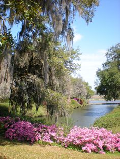 Magnolia Plantation in Charleston, South Carolina Magnolia Plantation, Plantation Houses, Charleston South Carolina, Charleston Sc, Charleston Plantations, Cool Places To Visit, Places To Go, Magnolia Gardens, Gardens