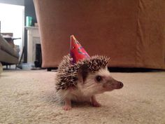 Love this photo of Emily's Hedgehog. Too cute!